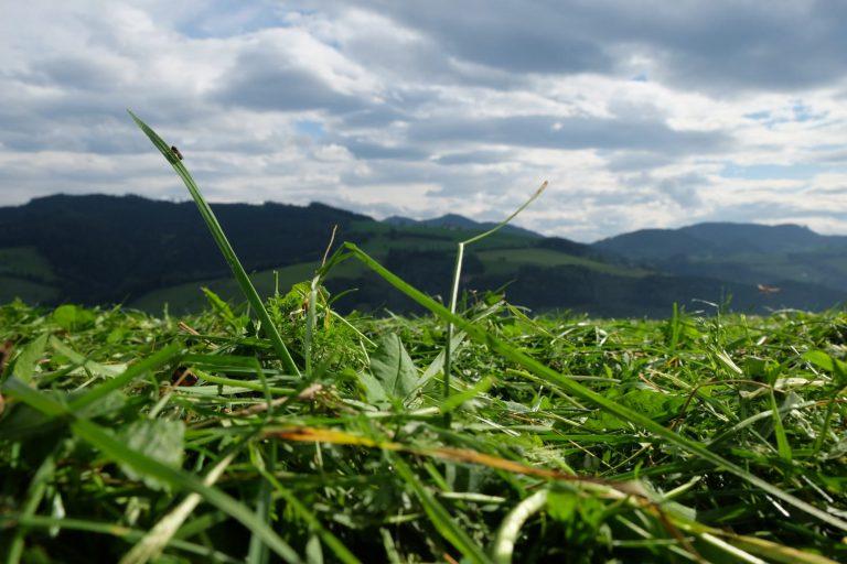 Grünland mit frischem Gras