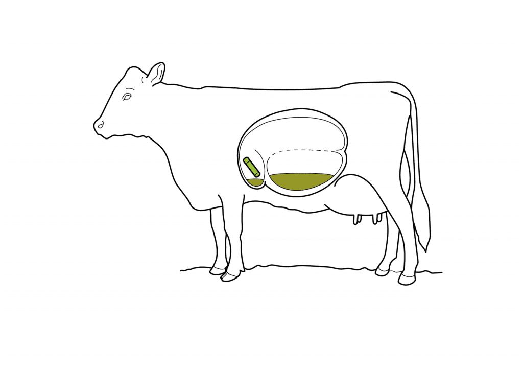 Milchkuh Abbildung Zeichnung.